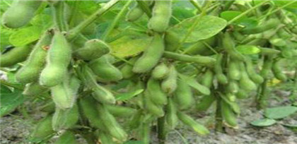 Chicago soybean futures fall amid China-US trade frictions,